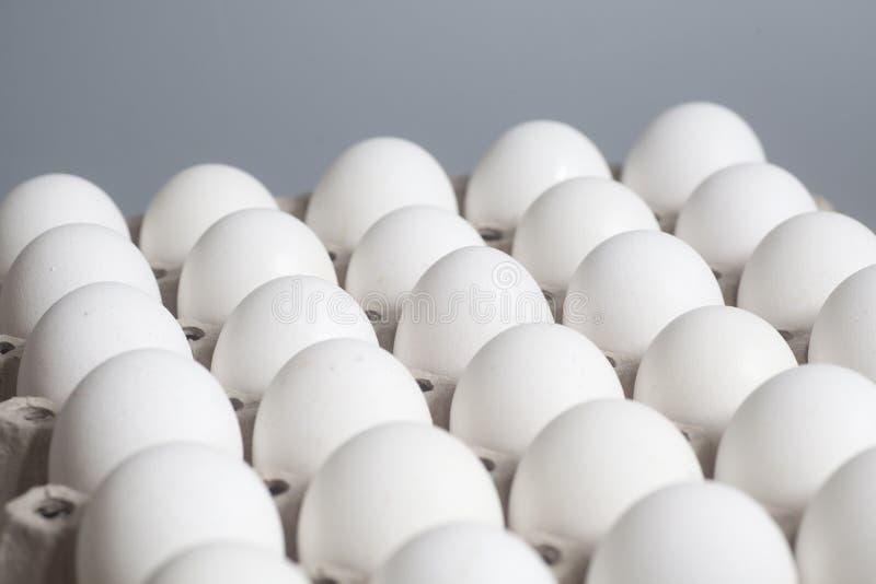Pappeikasten mit Hühnerweißen eiern lizenzfreies stockbild