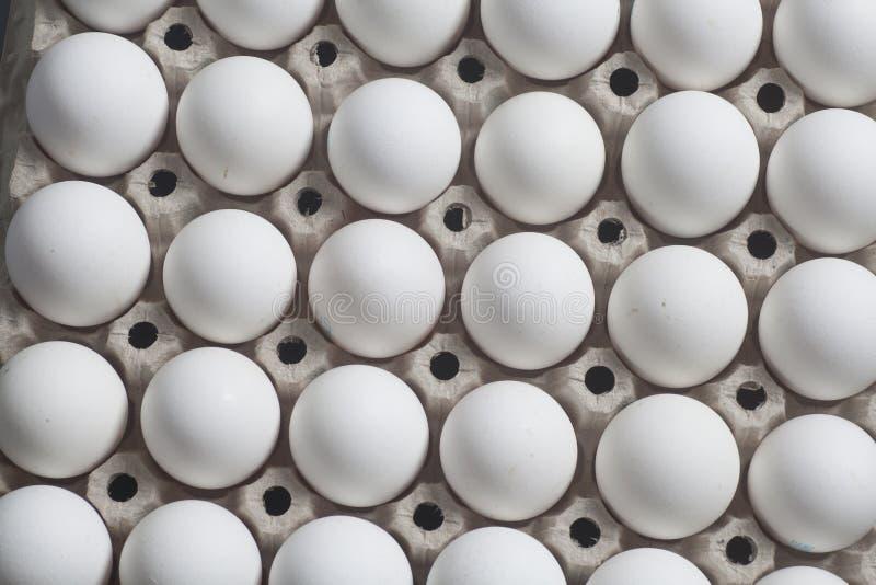 Pappeikasten mit Hühnerweißen eiern lizenzfreie stockbilder