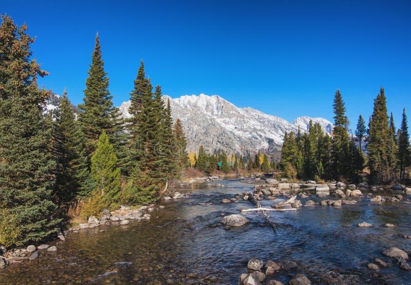 Pappel-Nebenfluss in großartigem Nationalpark Teton, Wyoming stockfotos
