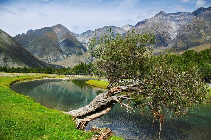 Pappel, Türkisfluß und Berge lizenzfreie stockbilder
