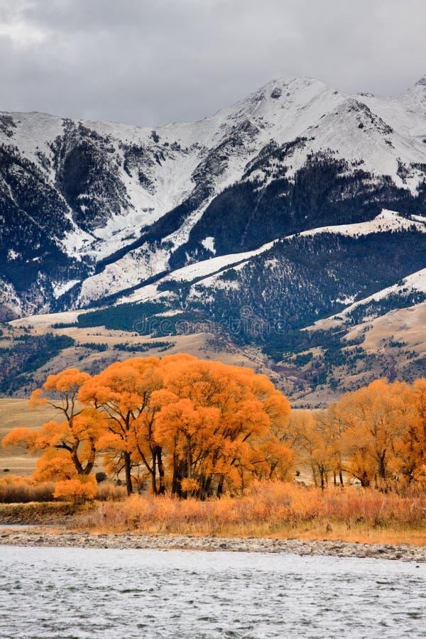Pappeln und Berge, Montana lizenzfreies stockbild