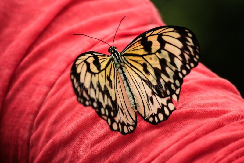 Pappers- drakefjäril med breda vingar som vilar på en hand arkivfoton