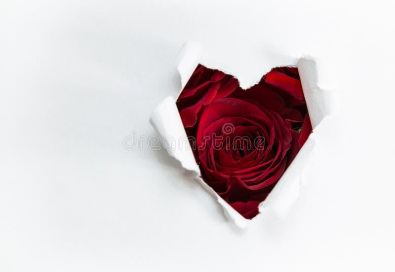 Pappers- hjärta och röda rosor royaltyfri foto