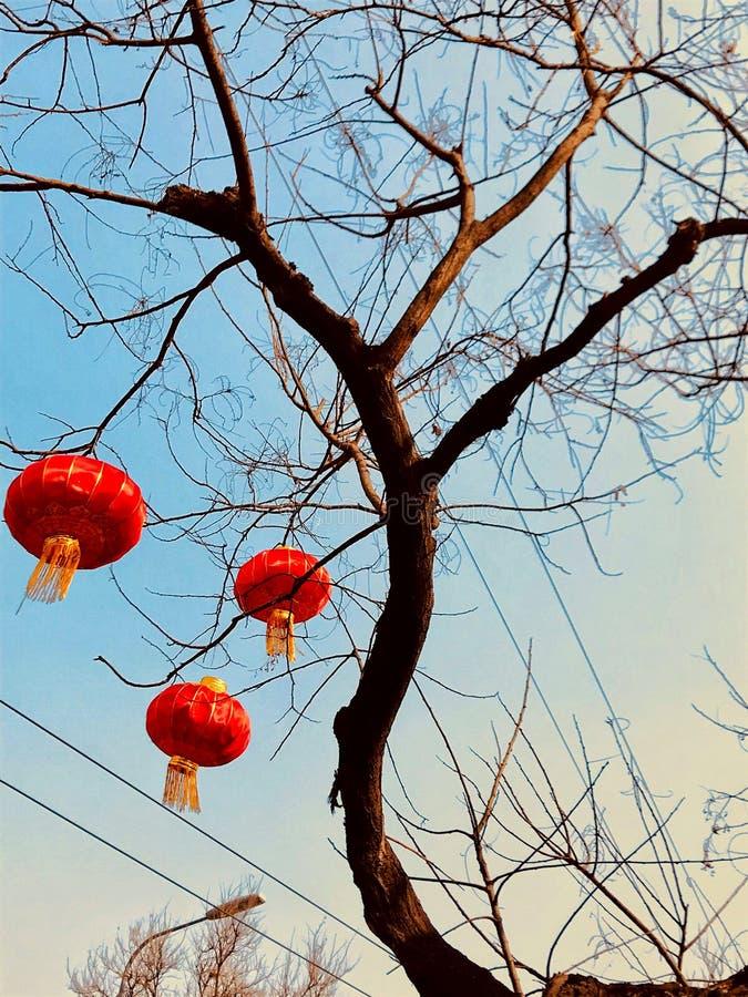 Pappers- lyktor som hänger på ett träd av Pekinggator arkivbilder