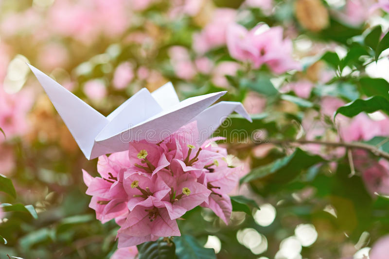 Download Pappers- svan på blomman fotografering för bildbyråer. Bild av pink - 78727983