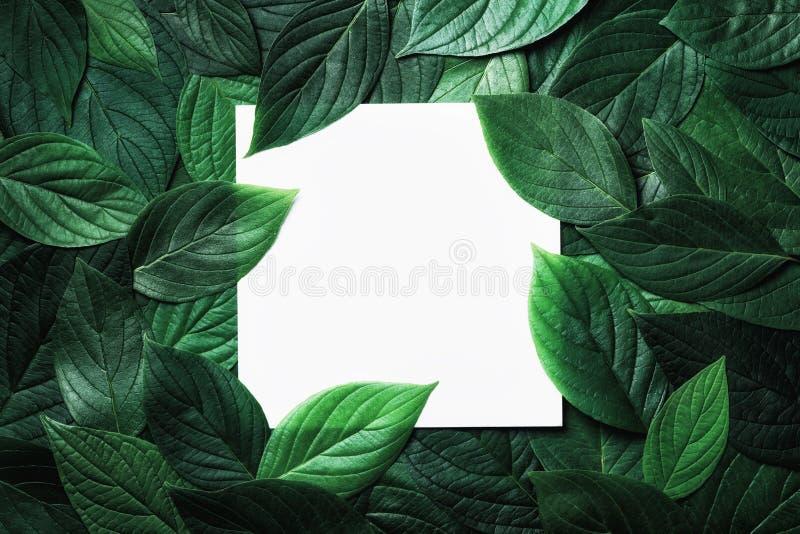 Papperskort i grönt blad Vackers bakgrund fotografering för bildbyråer