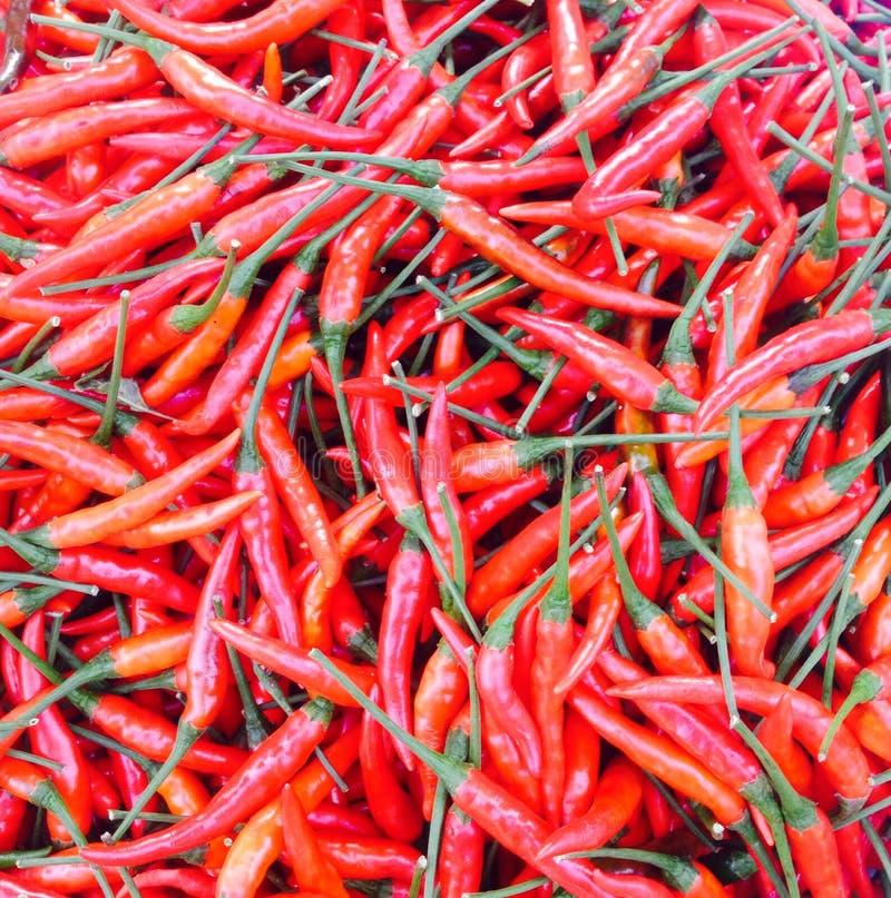 Paprika lizenzfreies stockbild
