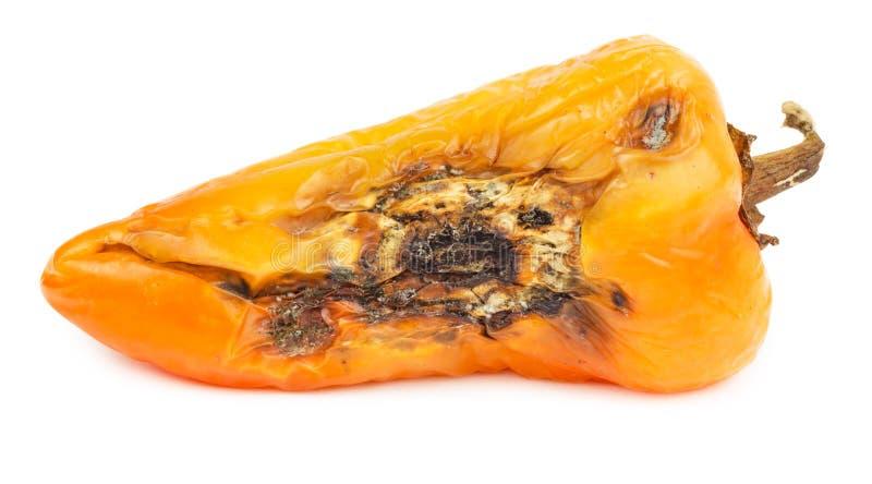 Paprika anaranjado putrefacto aislado imagenes de archivo