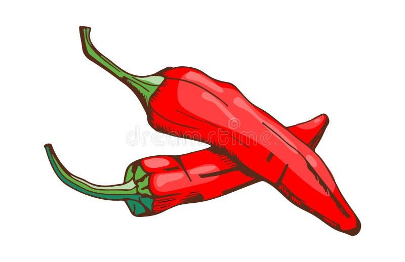Paprika för ingrediens för grönsak för stil för smaktillsats för mat för peppar för röd chili hand kryddig dragen och organisk ny royaltyfri illustrationer