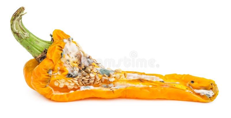 Paprika putrefacto aislado imagen de archivo