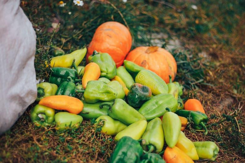 Paprikas rouges et jaunes sur l'étagère de marché en plein air photographie stock