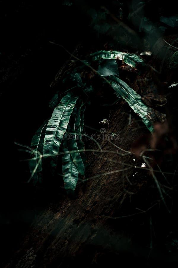 Paproć w świetle w lesie obrazy stock