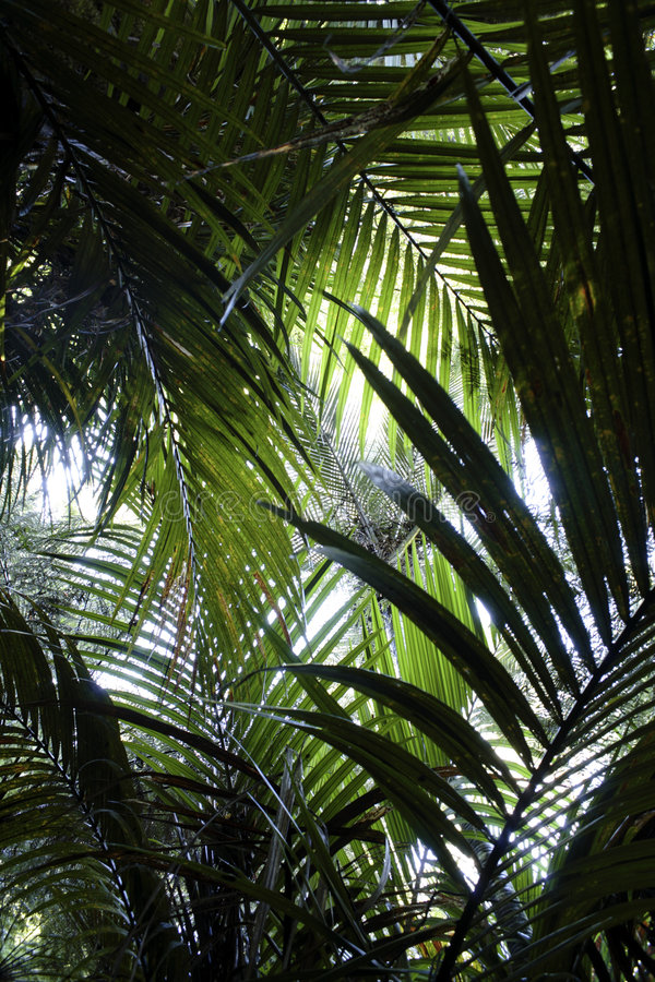 paproć dżungli obrazy royalty free