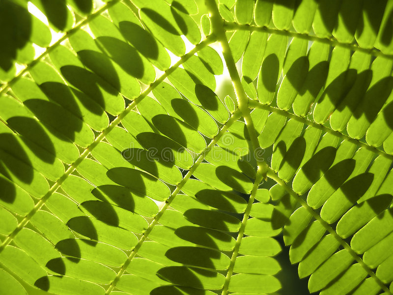 paproć green fotografia stock