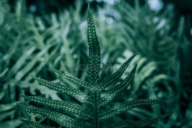 Paproć liście w ogródzie obraz royalty free