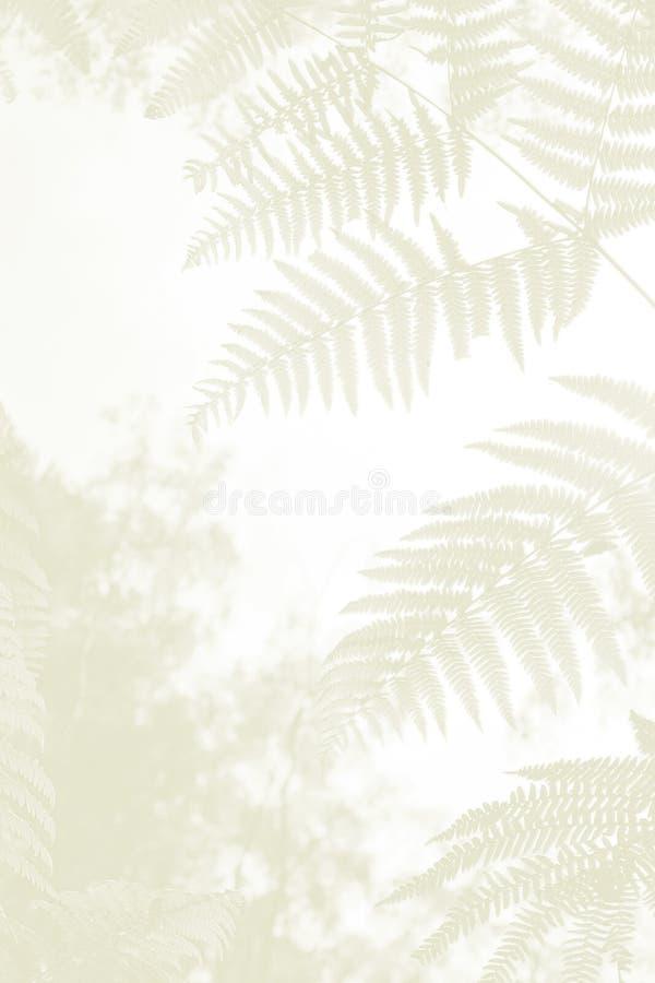 Paproć opuszcza w lasach, opłakuje tło obrazy royalty free