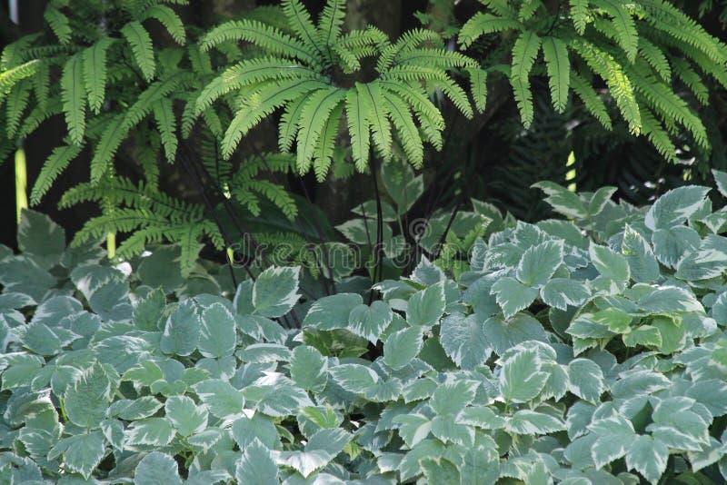 Paprocie I Varigated zieleni ulistnienie W Ciemniutkim Garde obraz stock