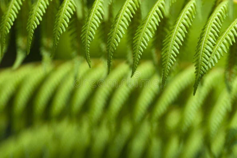 Paprocie Zielenieją Tropikalnego Zdjęcia Stock