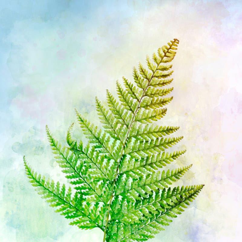 Paprociowa akwarela z stubarwnym tłem zdjęcie stock