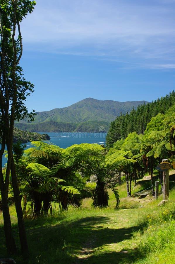 Paprociowa Drzewna ścieżka w Marlborough Brzmi Nowa Zelandia obrazy stock