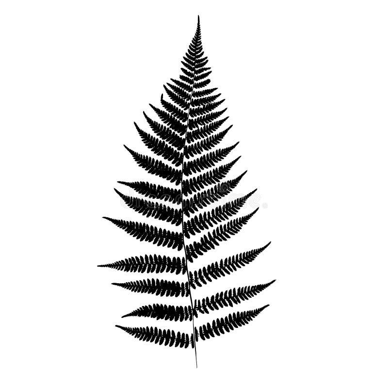 Paprociowa liść sylwetka royalty ilustracja