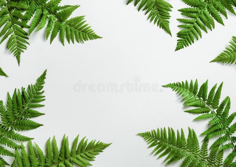 Paprociowy botaniczny tło zdjęcia royalty free