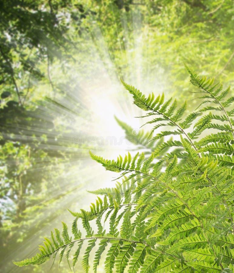 Paprociowy Bush przeciw tłu światło słoneczne, natury tło zdjęcie stock