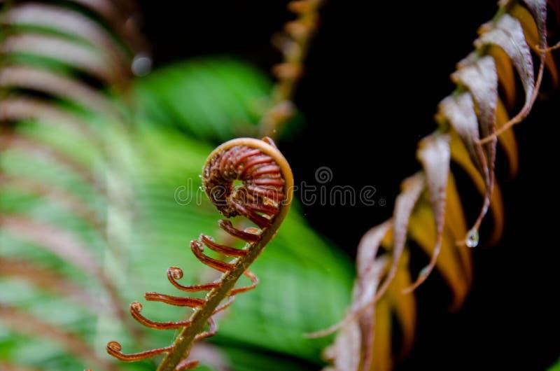 Paprociowy dorośnięcie w dolinie dżungla zdjęcie stock