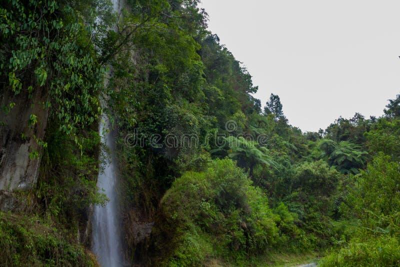 Paprociowy drzewny Cyathea podophylla w lesie Samosir wyspa, Medan, Indonezja zdjęcie stock