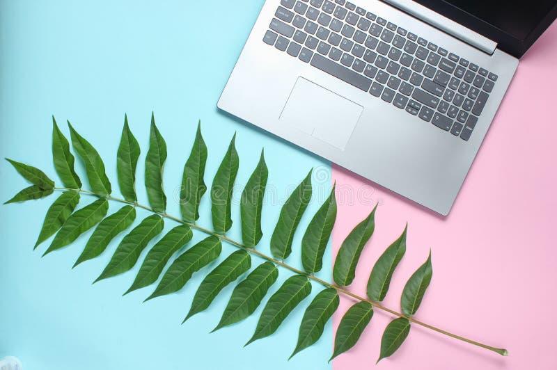 Paprociowy liść, laptop na barwionym pastelowym tle, botaniczny styl, nowożytni gadżety, online praca, odgórny widok, minimalizm obrazy royalty free