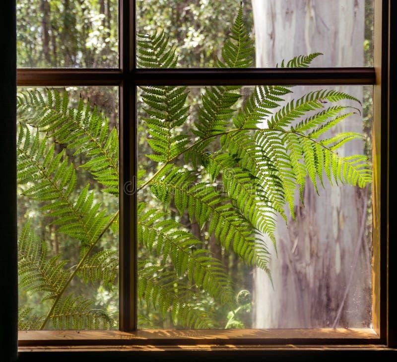 Paprociowy liść w mój okno obraz royalty free