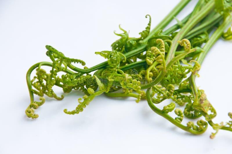 paprociowy warzywo fotografia stock