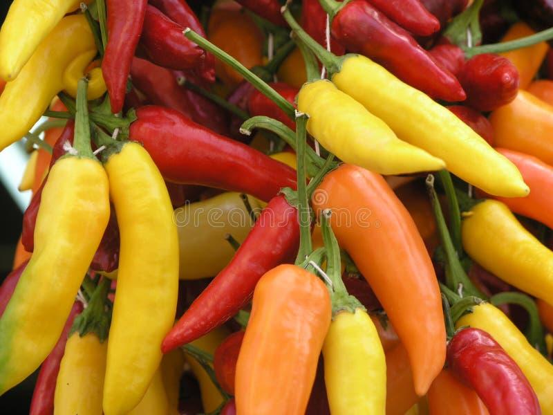 papryka chili zdjęcia stock