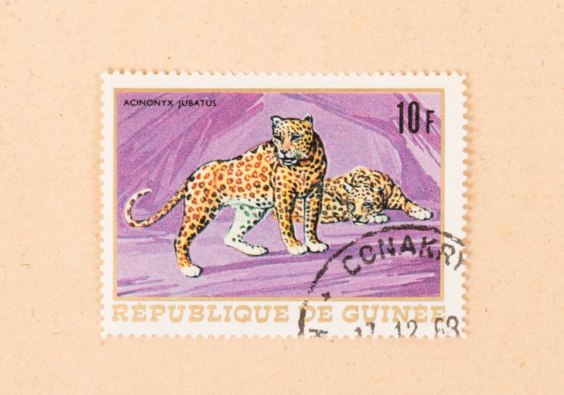 A stamp printed in Papua New Guinea shows a cheetah, circa 1980. PAPUA NEW GUINEA - CIRCA 1980: A stamp printed in Papua New Guinea shows a cheetah, circa 1980 royalty free stock photos