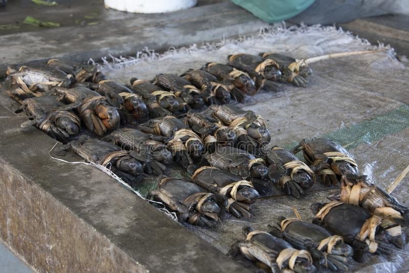 Papua Nya Guinea fiskmarknad! royaltyfri fotografi