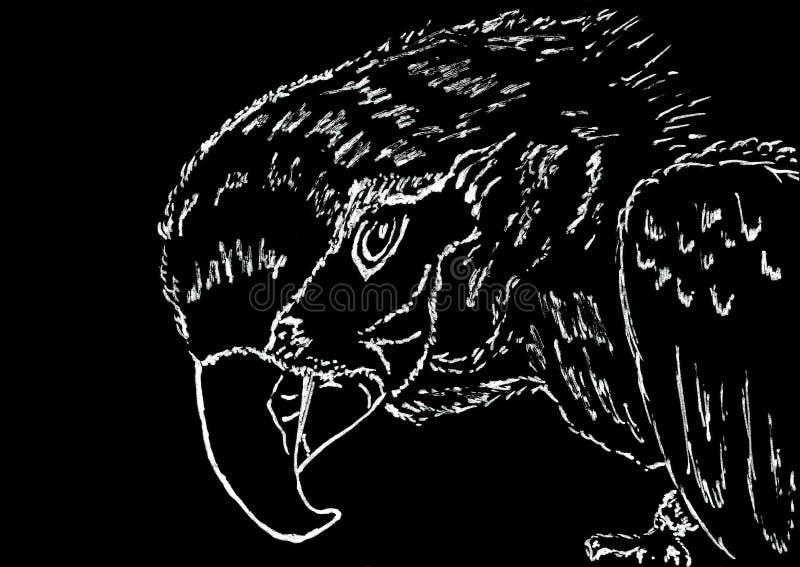 Papuga liniowa kierowniczy rysunek na czerń papierze royalty ilustracja