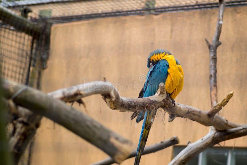 Papuga umieszczająca na drzewie obraz stock