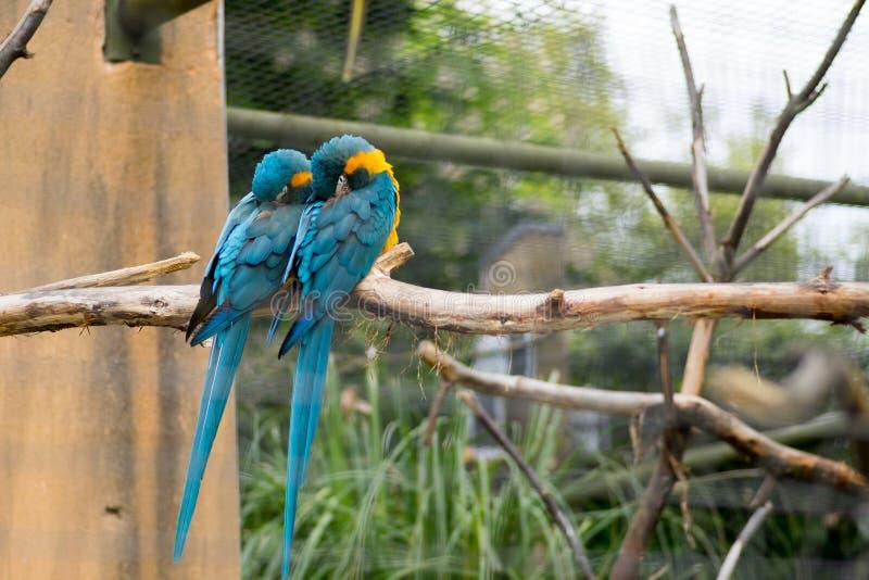 Papuga umieszczająca na drzewie zdjęcia stock