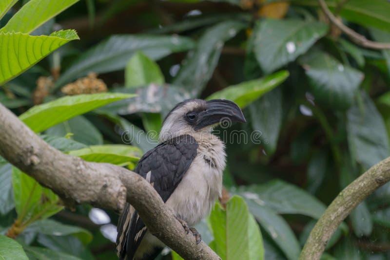 Papuga umieszczająca na drzewie zdjęcie royalty free