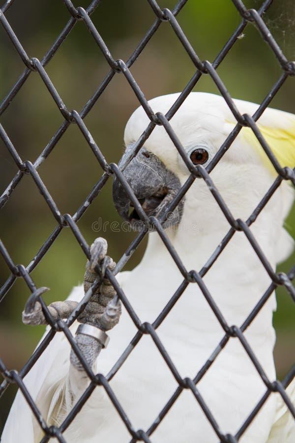 Download Papuga w klatce obraz stock. Obraz złożonej z dosyć, smutny - 28973919