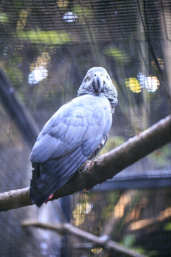 Download Papuga w zoo zdjęcie stock. Obraz złożonej z piórka - 106917634