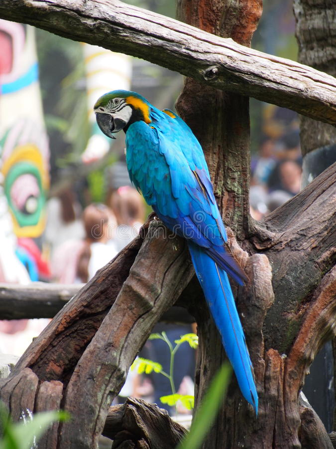 Papuga w zoo, Bangkok, Tajlandia zdjęcia stock