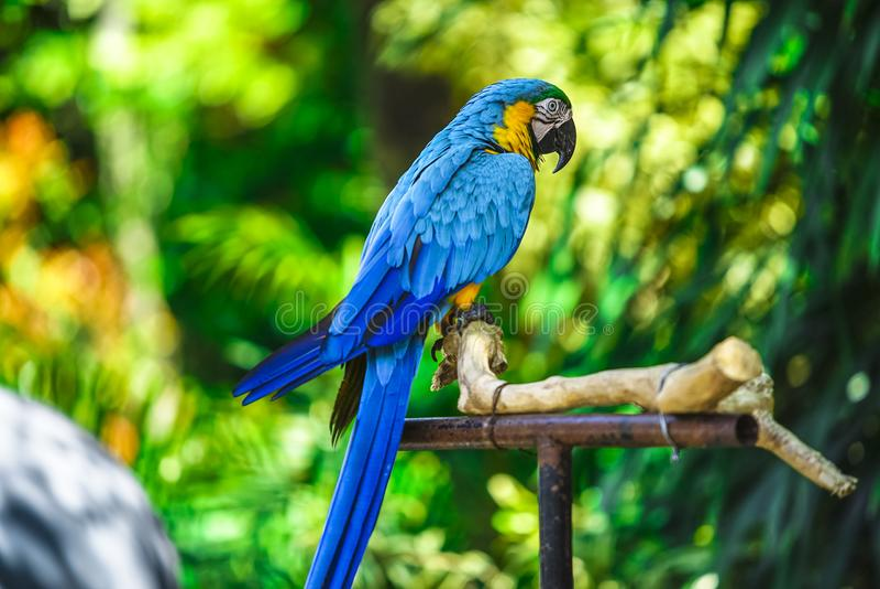 Papuga z bokeh tłem zdjęcia royalty free