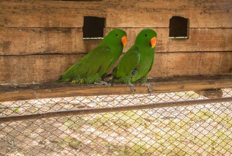 Papugi lub psittacines są ptakami znajdującymi w tropikalnym obrazy royalty free