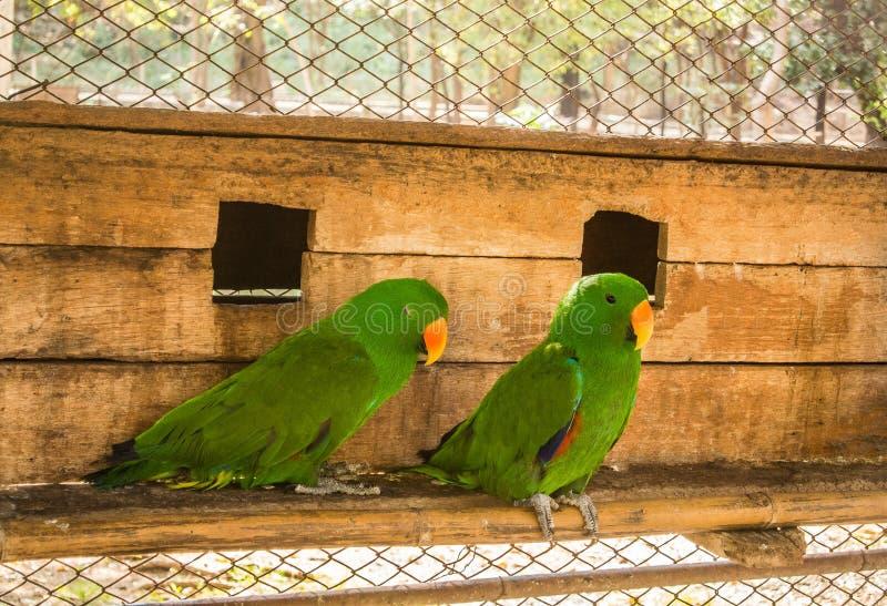 Papugi lub psittacines są ptakami znajdującymi w tropikalnym fotografia royalty free