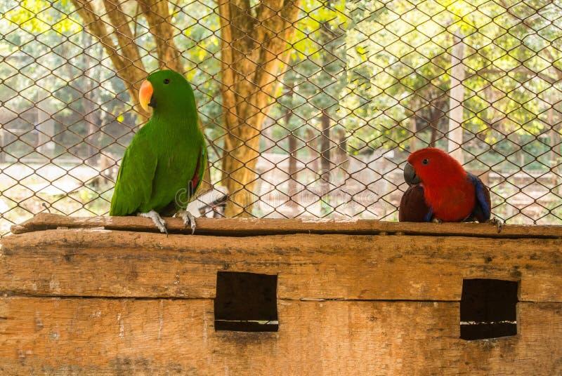 Papugi lub psittacines są ptakami znajdującymi w tropikalnym zdjęcia stock