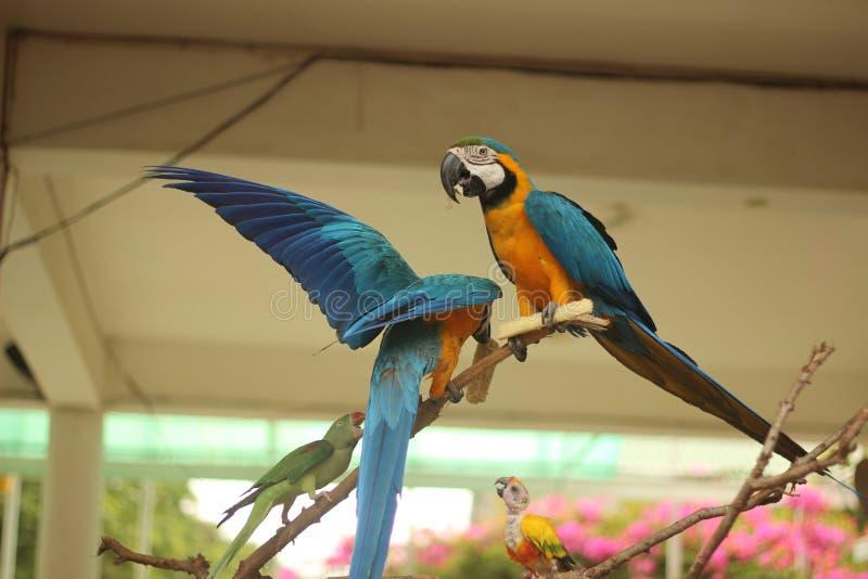 Papugi miłość fotografia stock