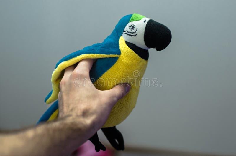 Papugi zabawka wewnątrz obsługuje rękę fotografia stock
