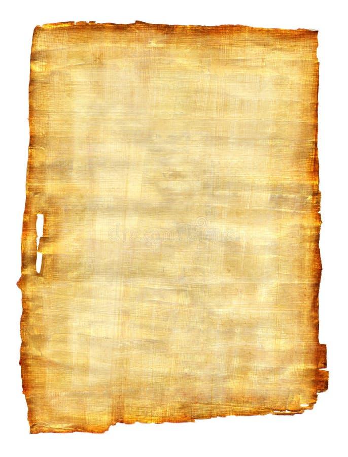 Papyrus lizenzfreie stockbilder