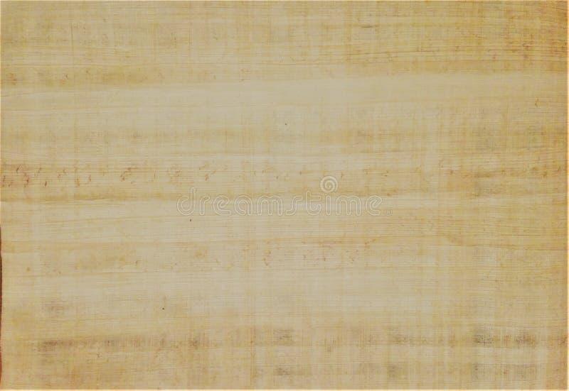papyrus стоковые изображения